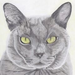 Cat Portrait Card: OSCAR