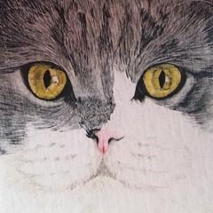 Cat Portrait Card: TEDDY