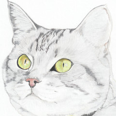 Cat Portrait Card: SIEB