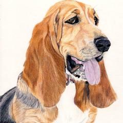 Dog Portrait Card: MAISIE the Basset Hound