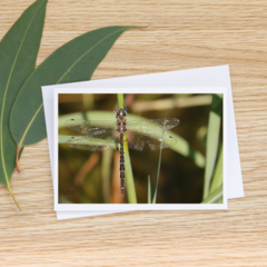 Dragonfly Dreaming - Photographic Card #55