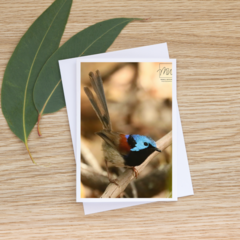 Male Variegated Fairy-Wren  - Photographic Card #54