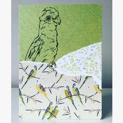 Pretty parrots card
