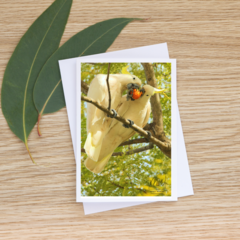 Sharing the Love - Sulphur-Crested Cockatoos -  Photographic Card #56