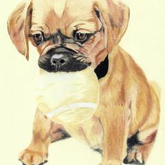 Dog Portrait Card: Pugalier
