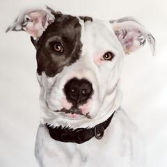 Watercolour Pet, Dog, Cat Portrait Painting, 2 Sizes Available