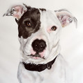 Watercolour Pet, Dog, Cat Portrait Painting, 2 Sizes Available