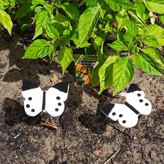 Cabbage Moth Decoys