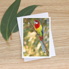 Eastern Rosella - Photographic Card #57