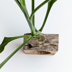PLANT POD IN NATURAL WOOD