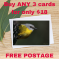 Male Red-Rumped Parrot - Photographic Card #58
