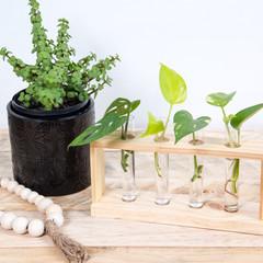 Plant Cutting Propagation Station