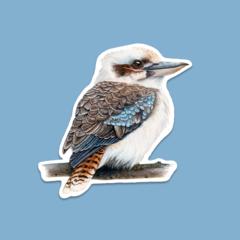 SHAPED ART STICKER   Kookaburra