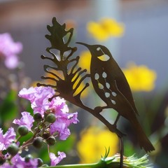 New Holland Honeyeater & Grevillea Brass Garden Decoration