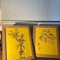 Fern Friends 2 Pack Framed Line Drawing Pieces
