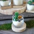 Succulents / Soy Candle / Gift / Home Décor