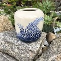 """""""Dee Why""""  