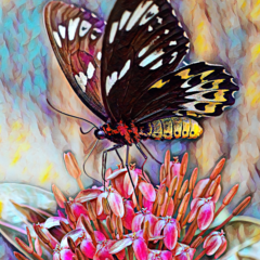 A Sweet Snack: Butterfly. Fine Art Print (A3 size or larger)
