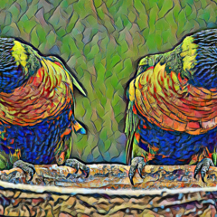 Rainbows In My Garden  .  Rainbow Lorikeets . Print (45cm x 30cm)