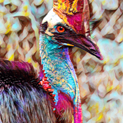 Be wary Of The Cassowary. Fine Art Print