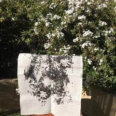 Black 'Dried Flowers' on White Tea Towel