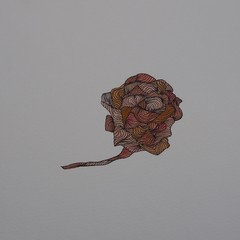 Rose Blank card