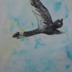 Black Cockatoo in Flight Blank Card