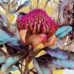Wonderful Waratah Flower. Oil painting, reproduction fine art print (Limited Ed)