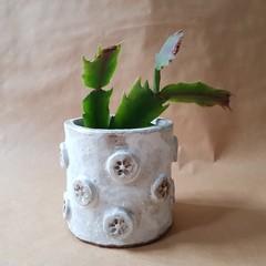 White 'flower button' planter.  Small hand built ceramic plant pot
