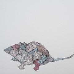Antechinus (Blank Card)