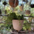 Organic Carved Hanging Planter