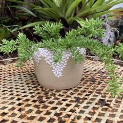 Organic Carved Planter