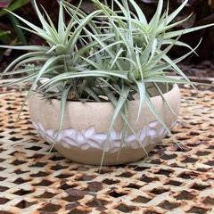 Organic Succulent Bowl