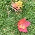 Yellow flower tear drop earrings - resin