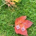 Ombre purple flower petal square earrings - resin