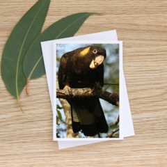 Young Male Yellow-Tailed Black Cockatoo -  Photographic Card #62