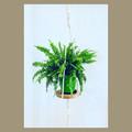 Planthanger (round disc)