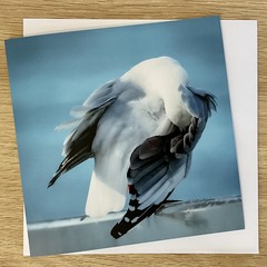 Under My Wing - Free Postage