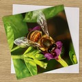 Busy Bee - Free Postage