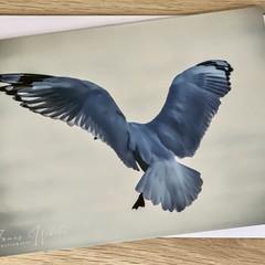 Seagull Landing - Free Postage