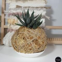 Kokedama | Succulent (Medium)
