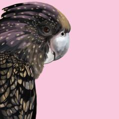 Golder Girl Black Cockatoo Print