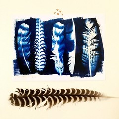 Feather Art Print 5x7 inches, Archival with a lustre finish