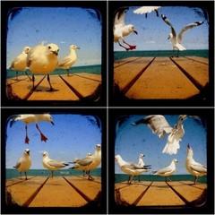 Seagull Photography Print Set, TtV Photos