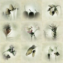 Set of 9 Botanical Photography Prints, 5x5 inches each, archival photgraphy