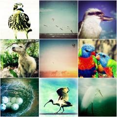 Set of 9 Animal Photography Prints, Australian Wildlife Photographs