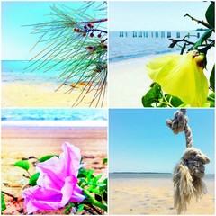 Beach House Decor, Set of 4 Coastal Photography Prints