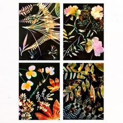 Lumen Art Print Set of 4 Botanical Flora 5x7 inch Prints