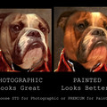 Customised Royal Pet Portrait in Renaissance Costume - Red Soldier