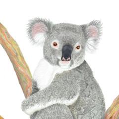 Koala, wildlife print, art print, nursery or home decor